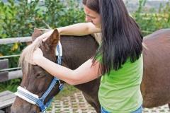 Carina Plöchl Pferd groß, Hier seht ihr einen Auszug