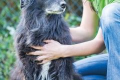 Carina Plöchl Omnipathie® Hund